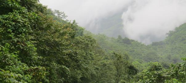 fog-in-jungle