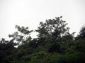 My Jungle